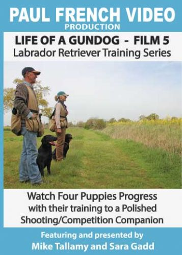 Life of a Gundog - Film 5 - Labrador Retriever Training Series